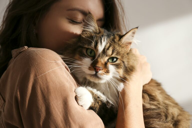 adopting a cat during coronavirus pandemic