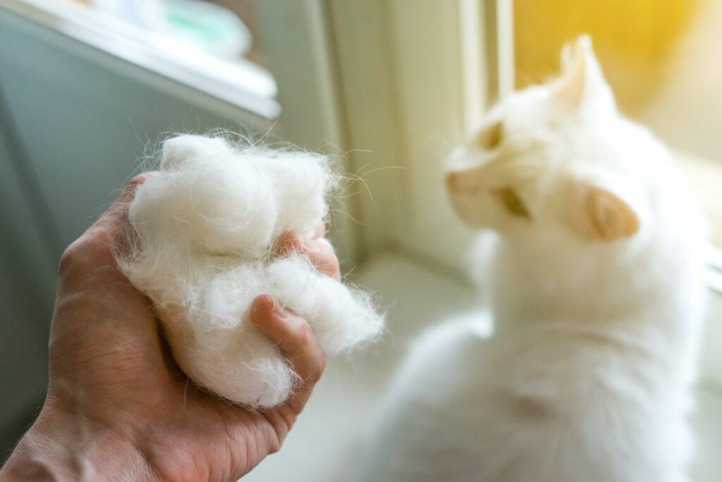 cat hairs in hand