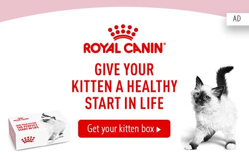 rc_sample_kitten_box