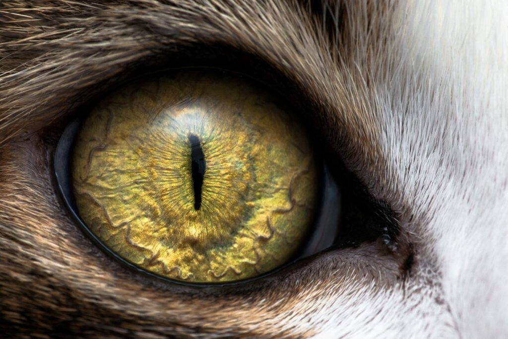cat vision - cat eyes