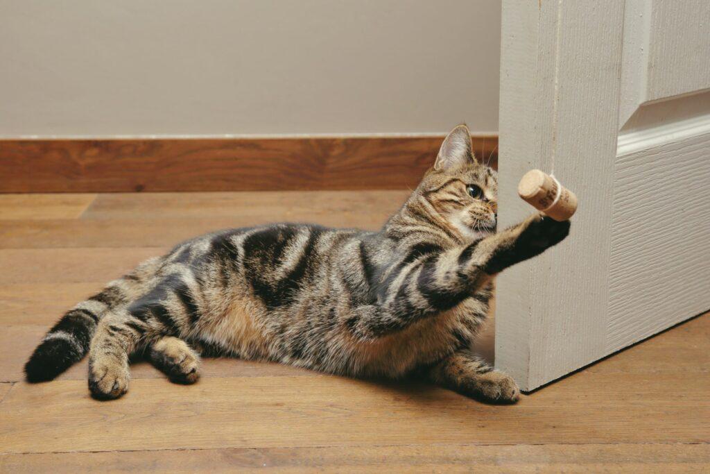 Cat playing wine cork