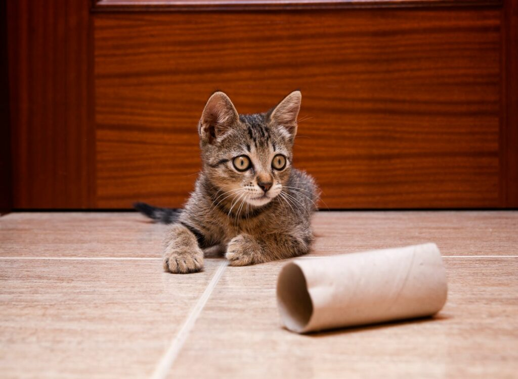 Cat playing with toilet roll cardboard