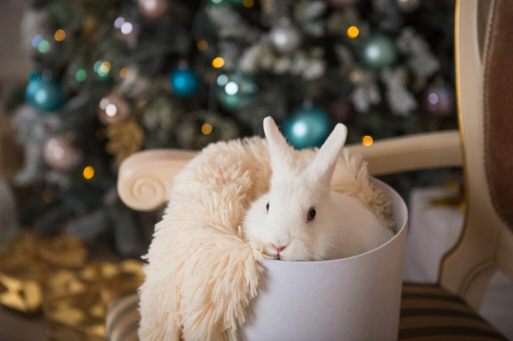 Bunny in cosy bed in front of christmas tree