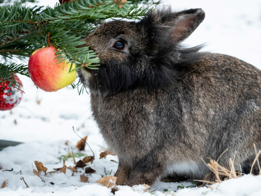 bunny playing with christmas bauble