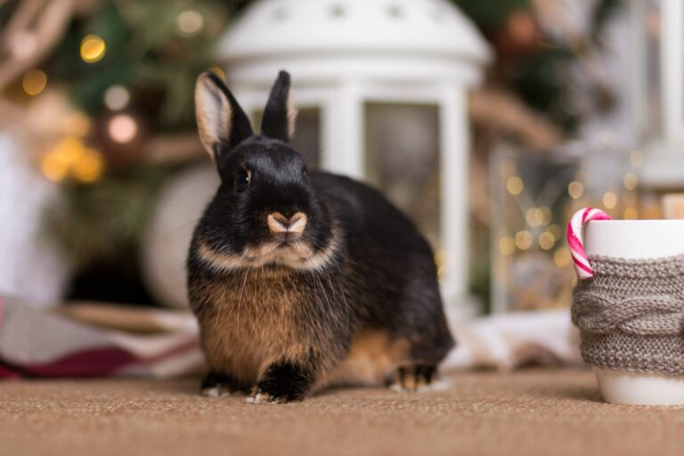 Rabbit on floor celebrating Christmas