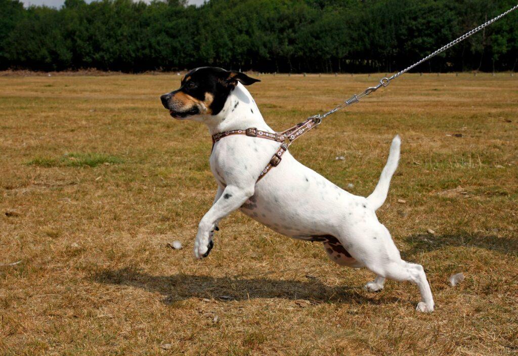 Dog pulling leads