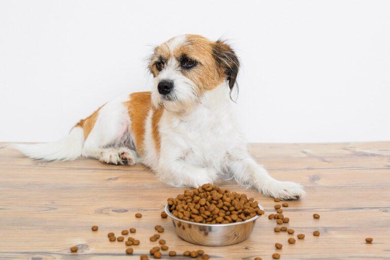 Prebiotics and probiotics support a heatlhy intestinal flora in dogs