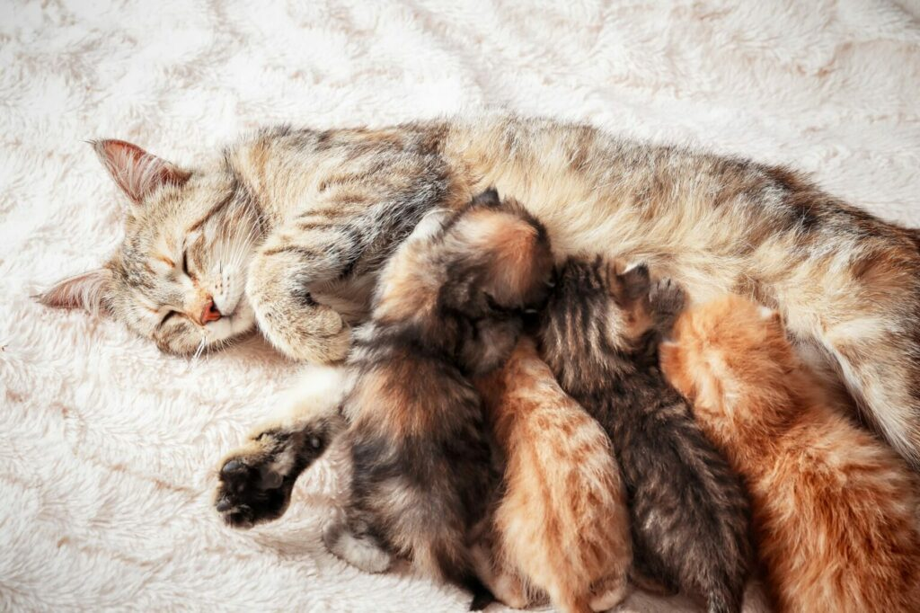mom cat with litter