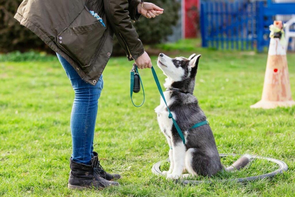 young dog training