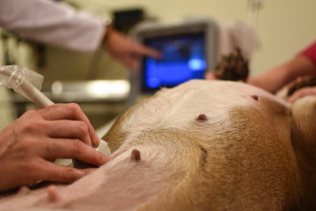 Vet check renal insufficiency dog