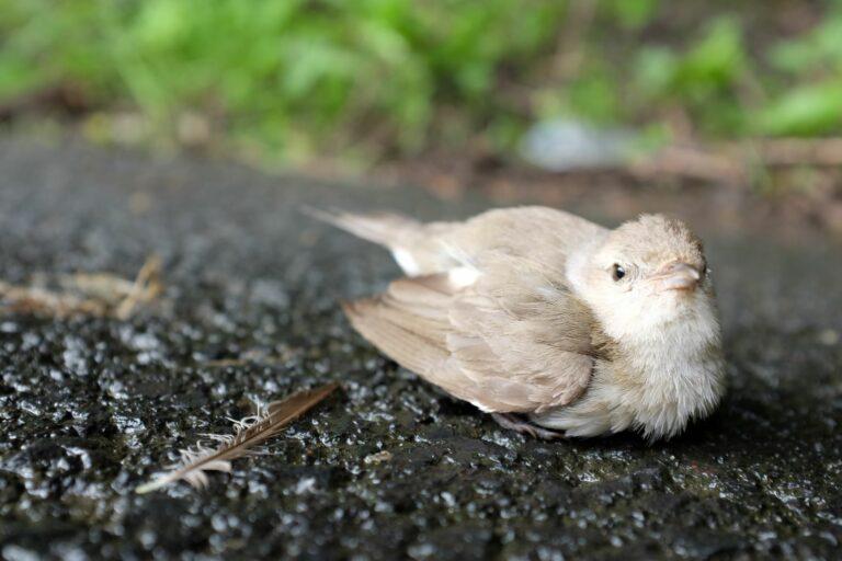 injured bird on road