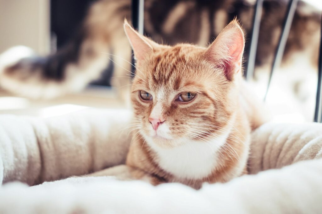 valentines day cat love