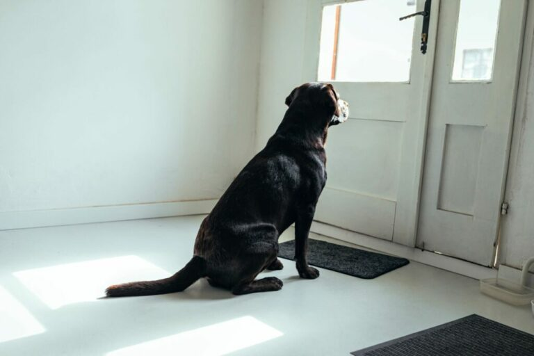 Anxious dog - separation anxiety