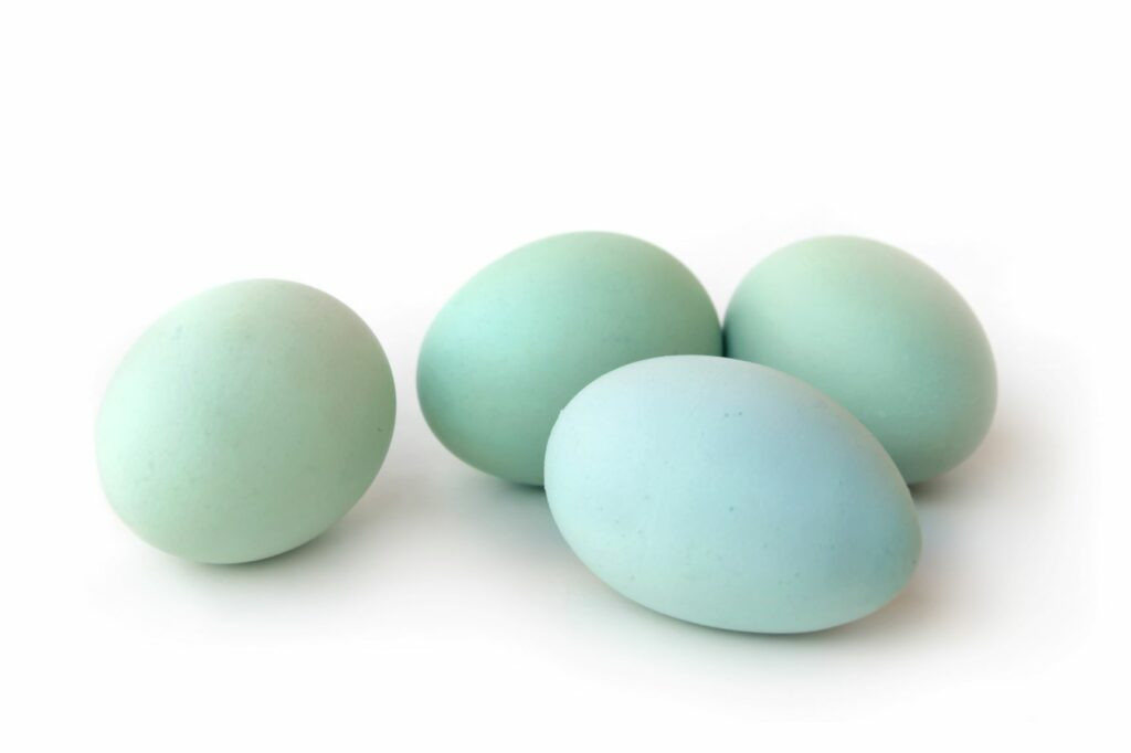 Blue Araucauna chicken eggs