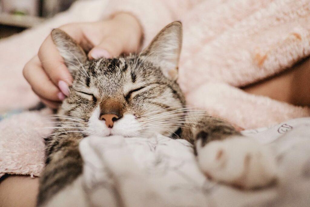 Cat purring