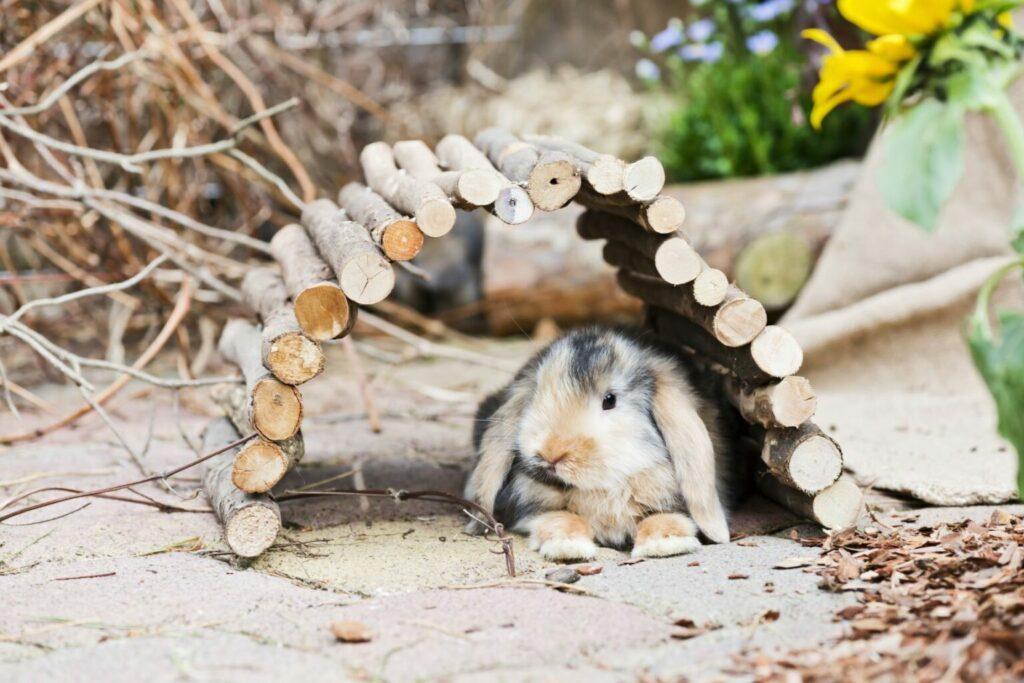 A rabbit in a wooden den.