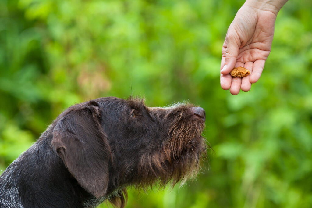 Teaching an adult dog