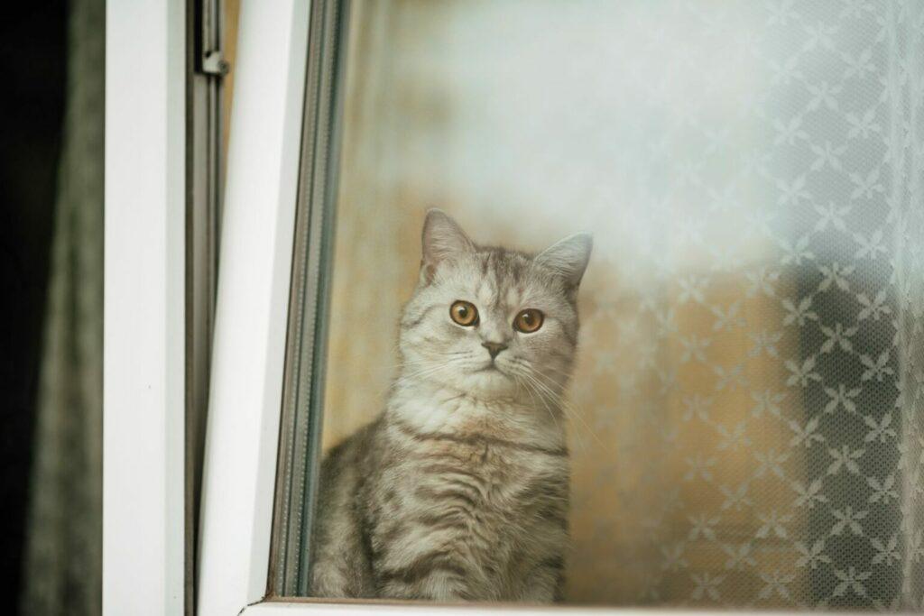 cat behind tilted window