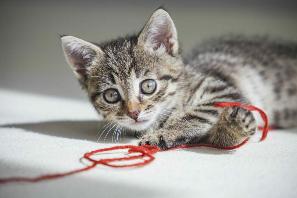 string can be dangerous for kittens