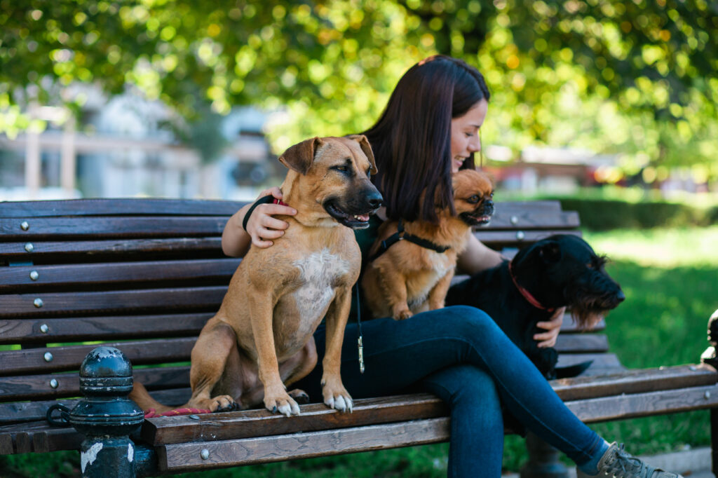 Dog walker sitting on bench and enjoying the park with dogs.