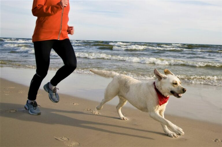 Jogging on the beach with your dog