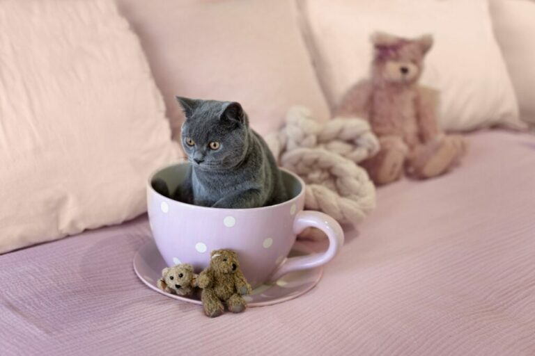 A teacup cat sitting in a teacup.
