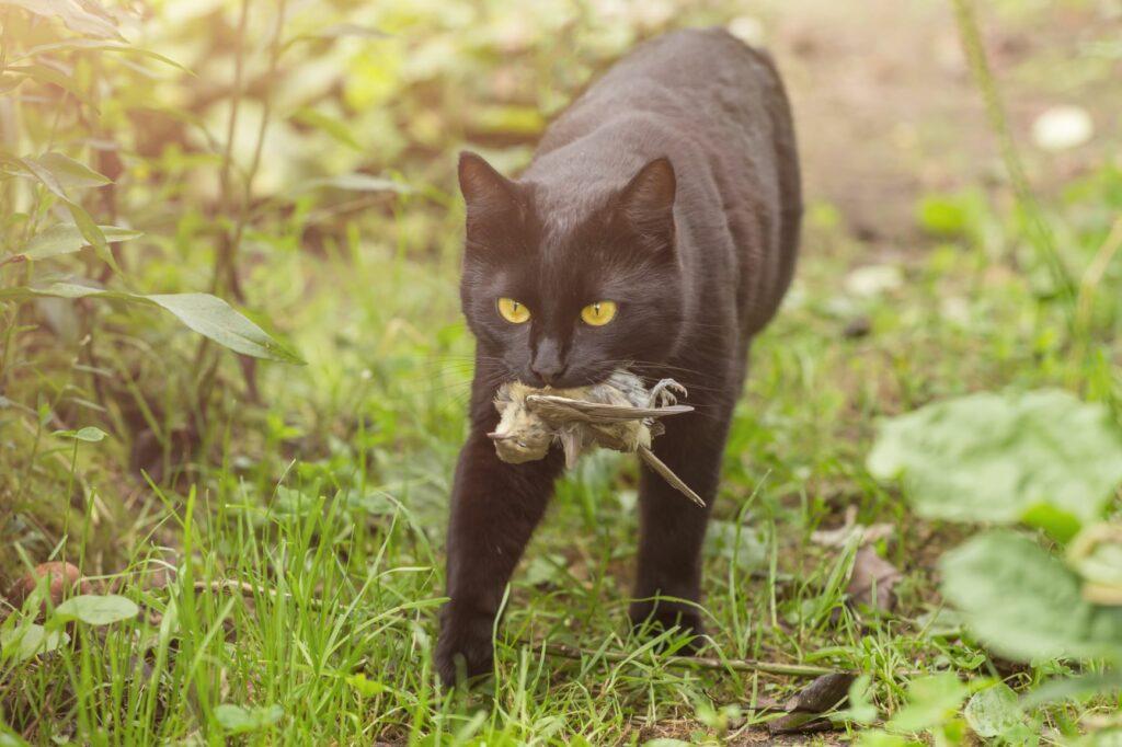 cat bird prey