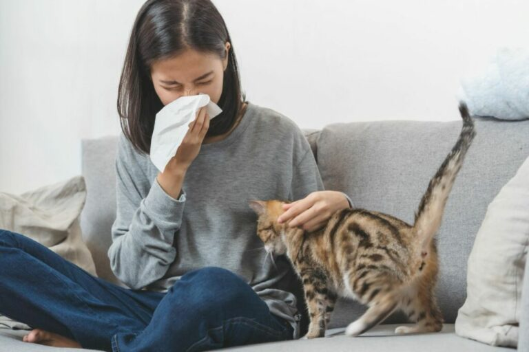 Cat hair allergy in humans