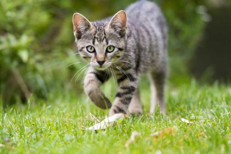 Outdoor kitten explores the garden