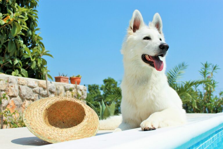 Sunburn in dogs
