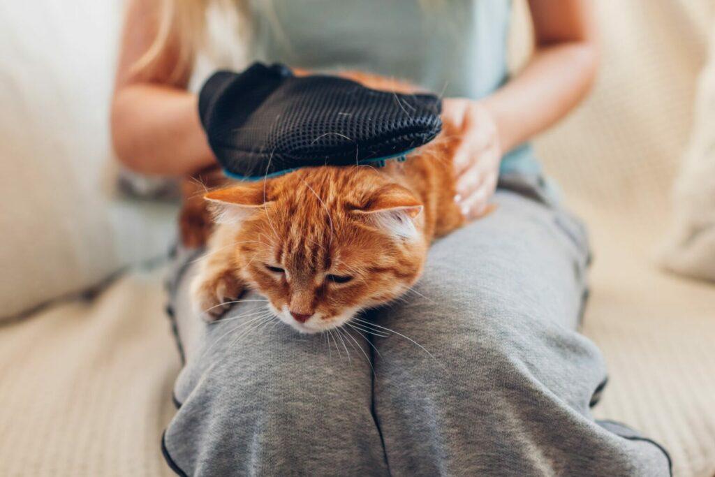 βούρτσισμα γάτας για να μειωθεί η αλλεργία στις τρίχες της γάτας