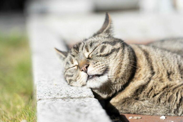 sunburn in cats