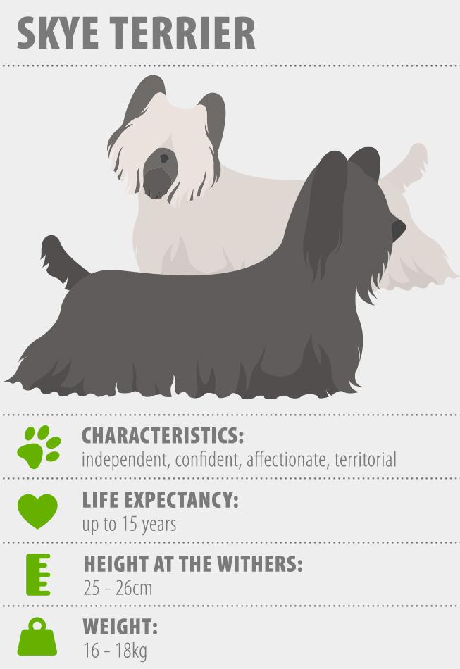 Skye Terrier fact sheet