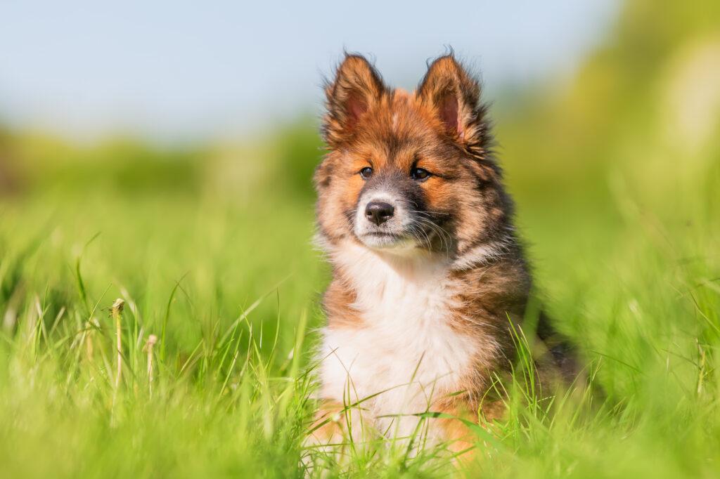 Elo Puppy